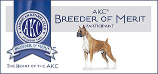 AKC Breeder of Merit in Arizona