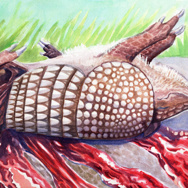 Kaylen Richardson, Roadkill, Watercolor