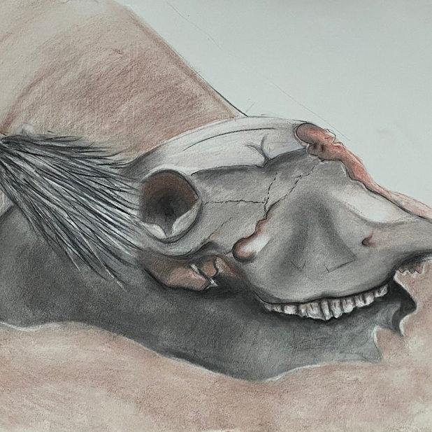 Adyson Sullivan, Skull Still Life