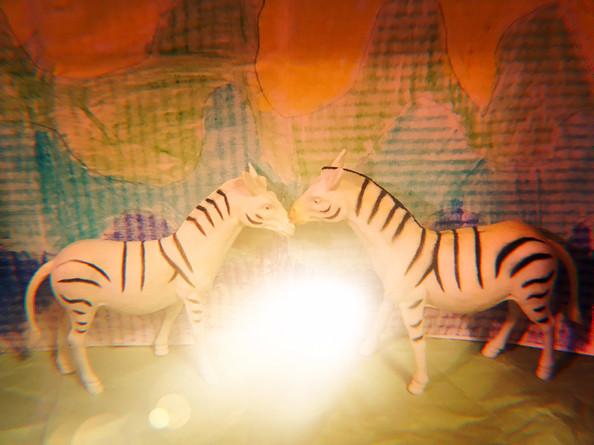 Josephine Berman, Zebras at Dawn, Photograph, 2020