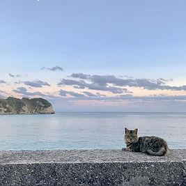 夕凪の海辺の散歩🐾ネコに見張られながら。この後フーッて怒られた^^;.jpg