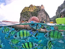 snokel fishes.jpg