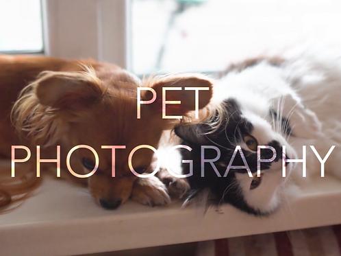 Pet Photoshoot