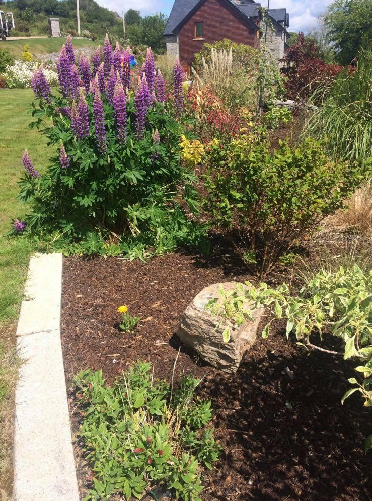 Bark Mulch Garden Bed