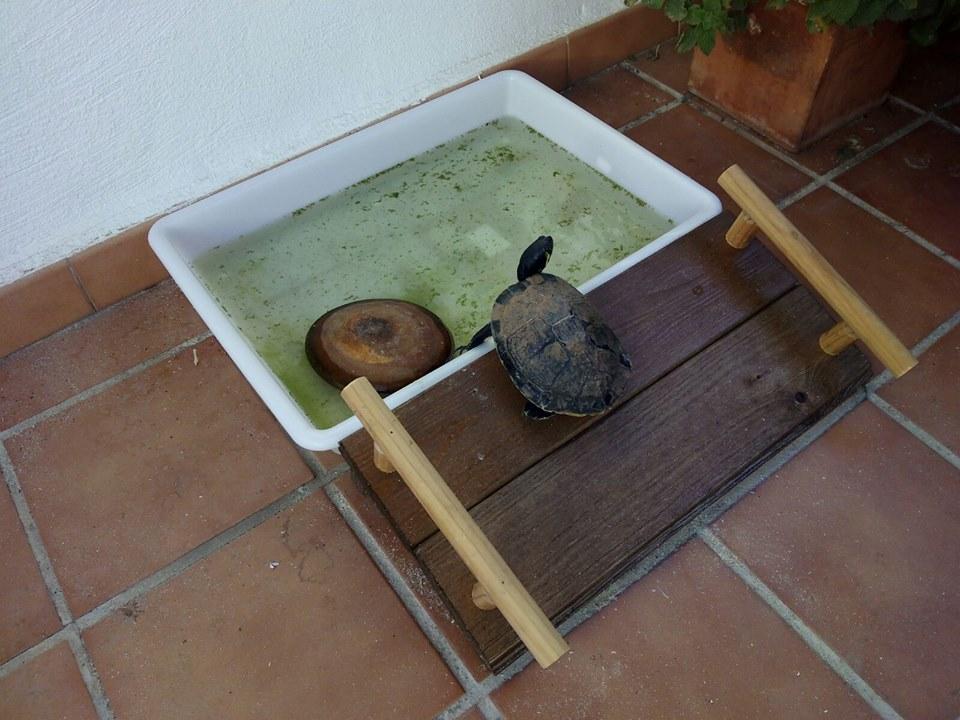 Rampa de acceso minipiscina tortuga