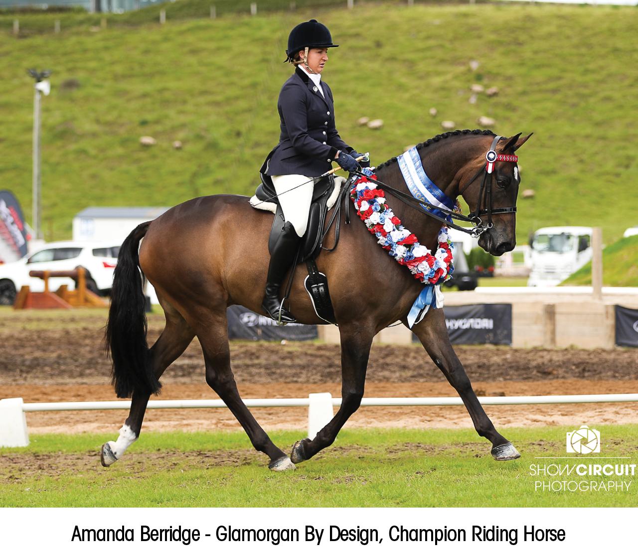 Amanda Berridge - Glamorgan By Design, Champion Riding Horse