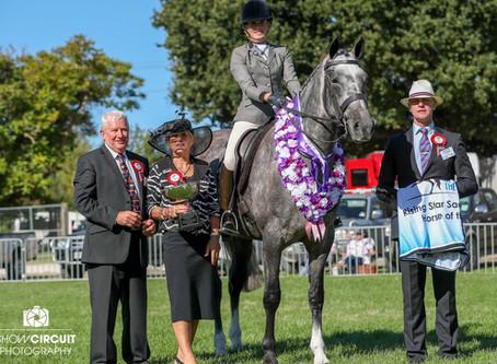 Rising Star Saddle Hunter Horse of the Year.