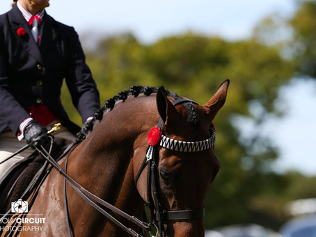 Ring One in the Showing Section Shines at Horse of the Year