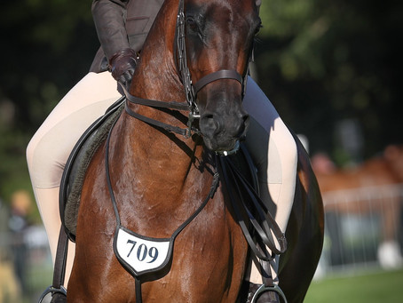 Horse of the Year Showing – Saddle Hunter Friday