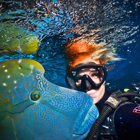 My friend the Napoleonfish