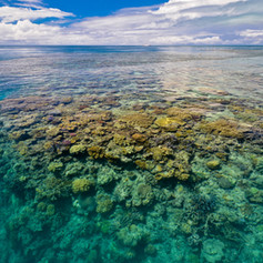 The reef at low tide