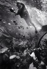 Cleaning Tank, Long Beach Aquarium (P-81)