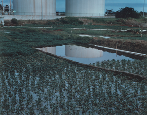 Watercress Fields, Hawaii, 1985 (HR-04)
