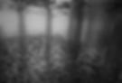 Screen Shot 2020-03-02 at 10.40.23 AM.pn