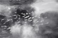 Aholehole in Cloudy Seascape (A-17)