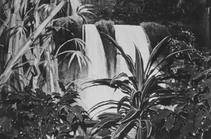 Hotel Backdrop, Hawaii, 1980 (CH-45)