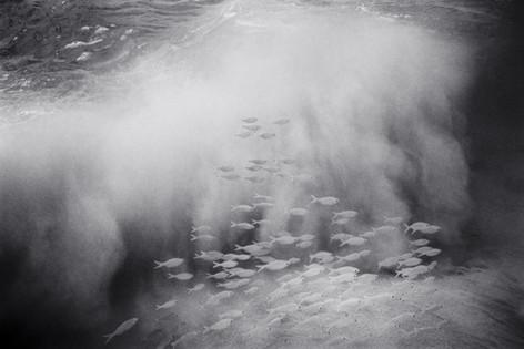 Aholehole and Sand Cloud (A-188)