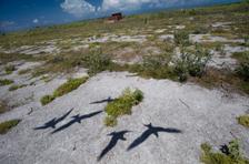 Shadows of Terns on WW2 Airstrip, Eastern Island, Midway (NWA-25)