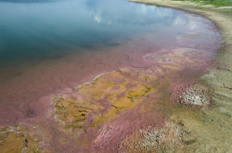 Laysan Lake (NWA-08)