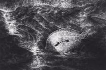 Flounder on Sand (SC-48)