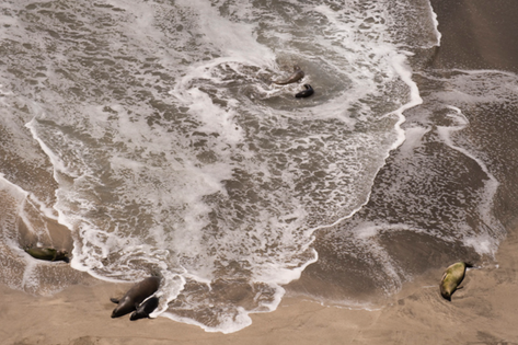 Monk Seals and Surf, Derby's Beach, Nihoa (NWA-54)