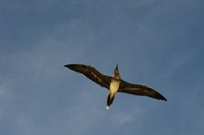 Bird, Mokumanamana (NWA-19)
