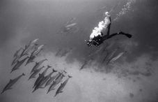 Diver with Dolphins (SP-64)
