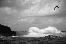 Birds and Surf, Mokumanamana (NWB-71)