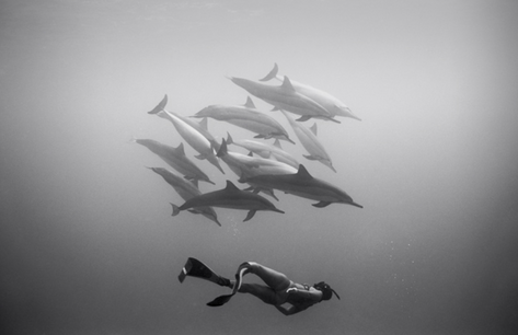 Kimi Werner with Dolphins #3 (B-341)