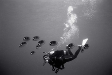 Diver with Raccoon Butterfly Fish (SP-84)