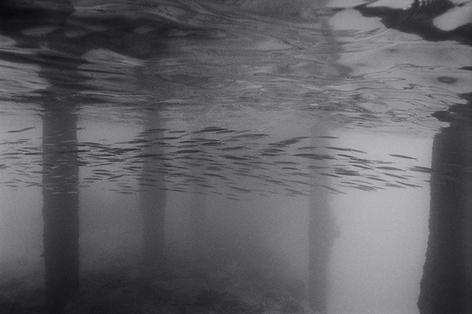Needlefish Under Pier (K-238)