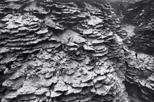 Bleached Plate Coral, Honaunau (G-49)
