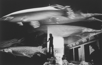 Aquarium with Reflections, Preservations, 1978 (CP-16)