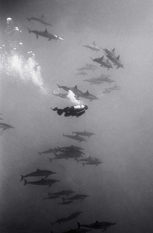Diving with Dolphins (SP-54)