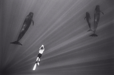 Freediver Swimming with Pilot Whales (W-21)