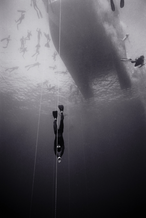 Freediver Martin Stepanek, Pacific Cup of Freediving (B-77)