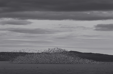 Mountain of Snow Geese (FL-44)