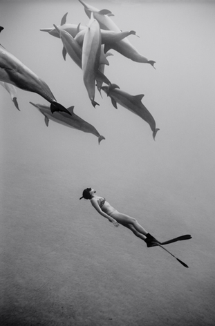 Kimi Werner with Dolphins #1 (B-339)