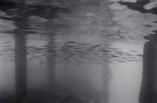 Needlefish under Pier #1 (K-238)