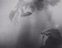 Fish and Kelp (SC-550)