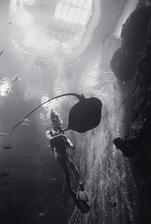 Diver with Hawaiian Stingray (P-150)