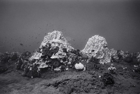 Bleached Smooth Mounding Coral, Ho'okena (G-42)