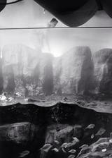 Working on Tank, Long Beach Aquarium (P-35)
