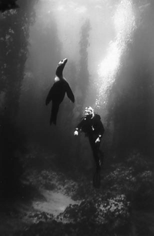 Sea Lion & Diver (SC-192)