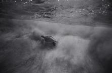 Green Sea Turtle under Breaking Wave (SC-2284)