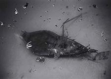 Pennantfish over Sunken Yacht (T-35)