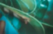Screen Shot 2020-07-05 at 12.50.47 PM.pn