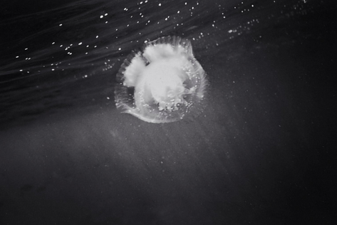 Jellyfish (SC-62)