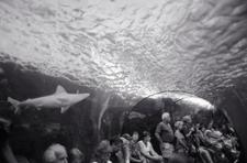 Shark Tube, Maui Ocean Center (P-02)