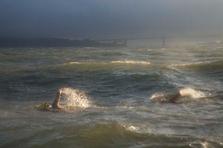 Bay Swimmers #5 (CB-05)